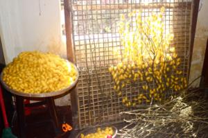Silkeproduktion